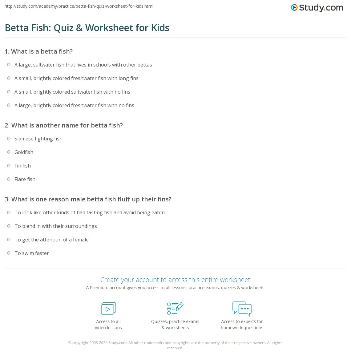 Freshwater fish facts - Print Betta Fish Facts Lesson For Kids Worksheet