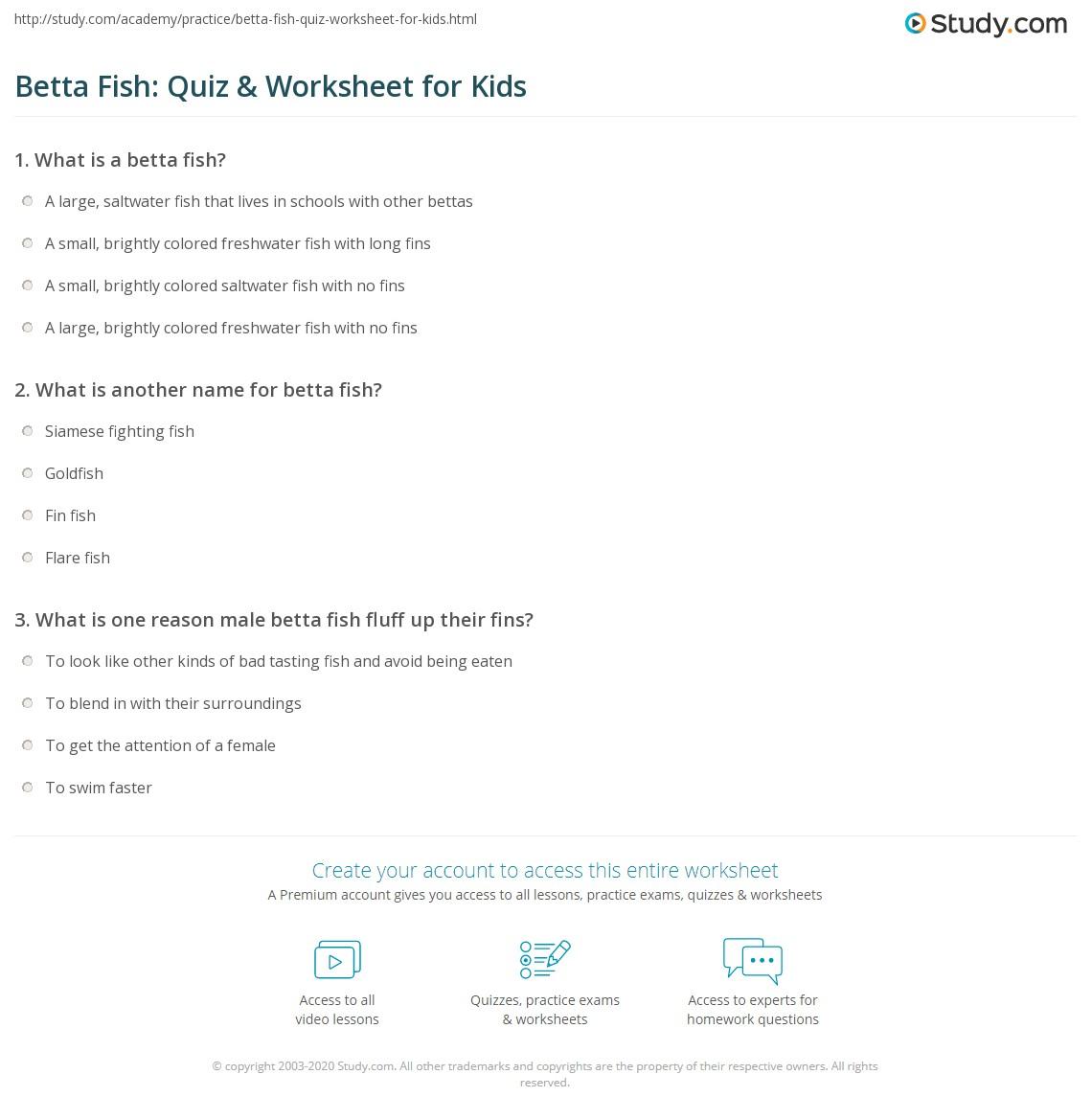 Betta Fish: Quiz & Worksheet for Kids   Study.com