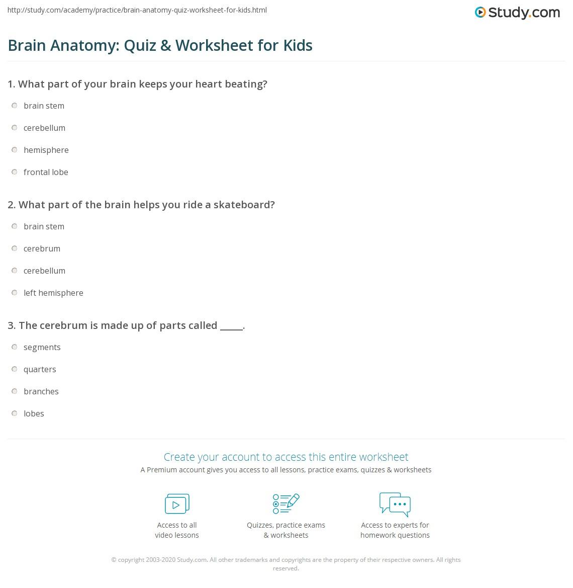 Brain Anatomy Quiz Worksheet For Kids Study