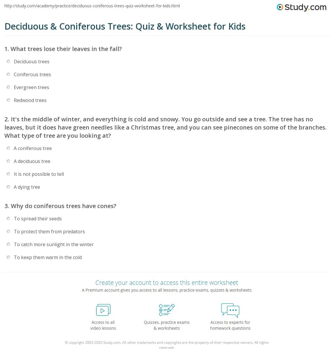 deciduous u0026 coniferous trees quiz u0026 worksheet for kids study com
