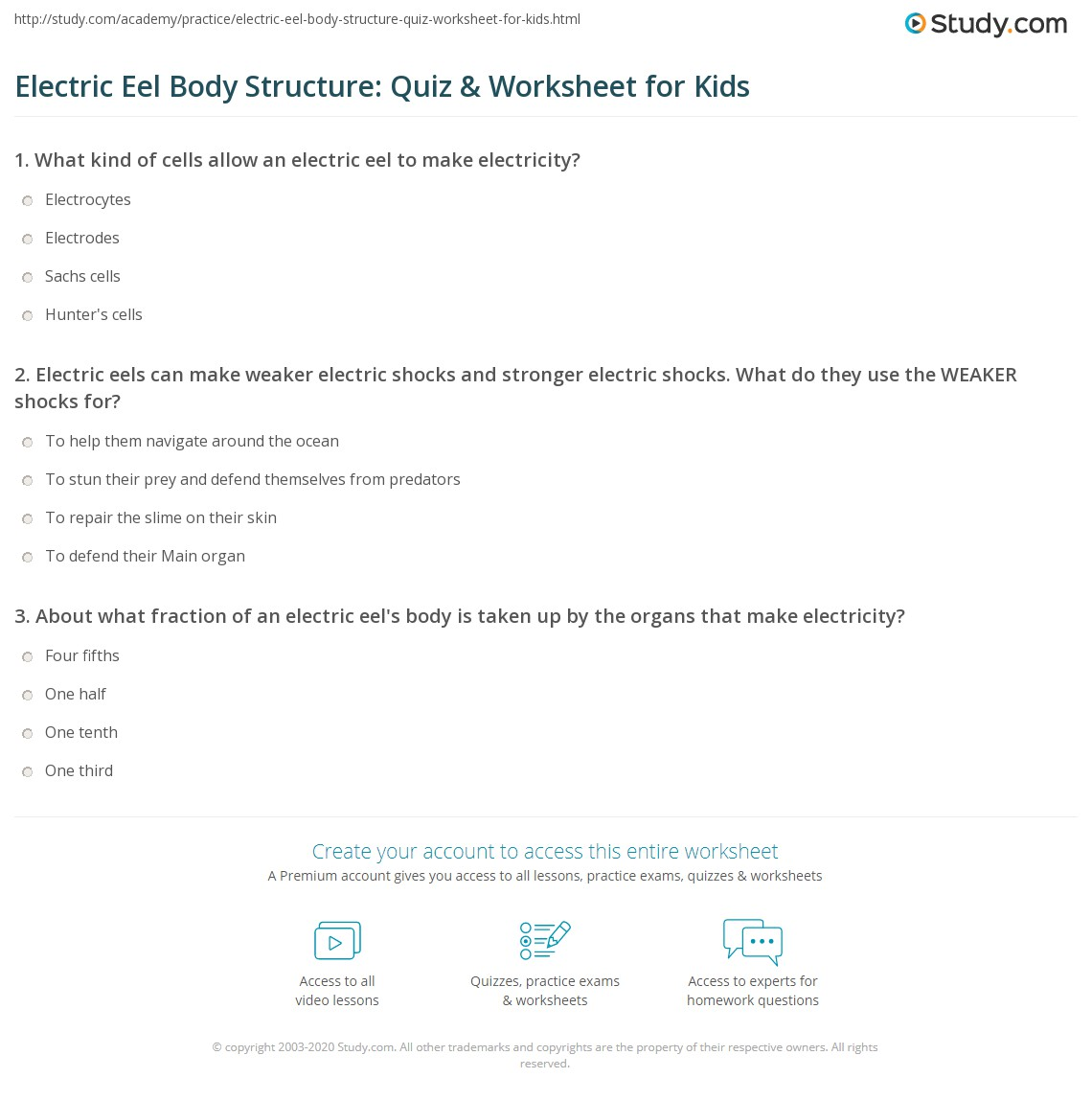 Electric Eel Body Structure: Quiz & Worksheet for Kids | Study.com