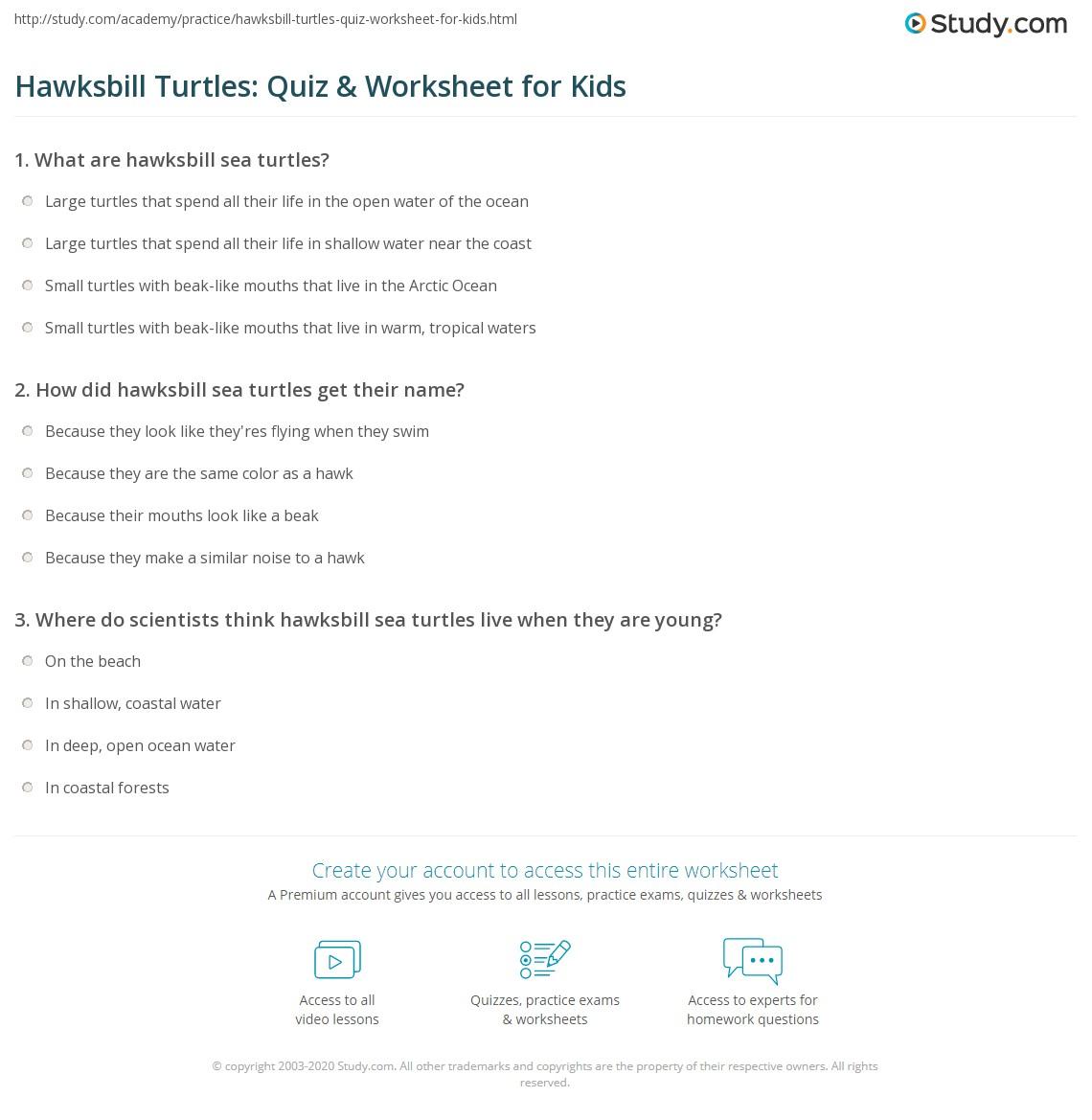 hawksbill turtles quiz worksheet for kids. Black Bedroom Furniture Sets. Home Design Ideas