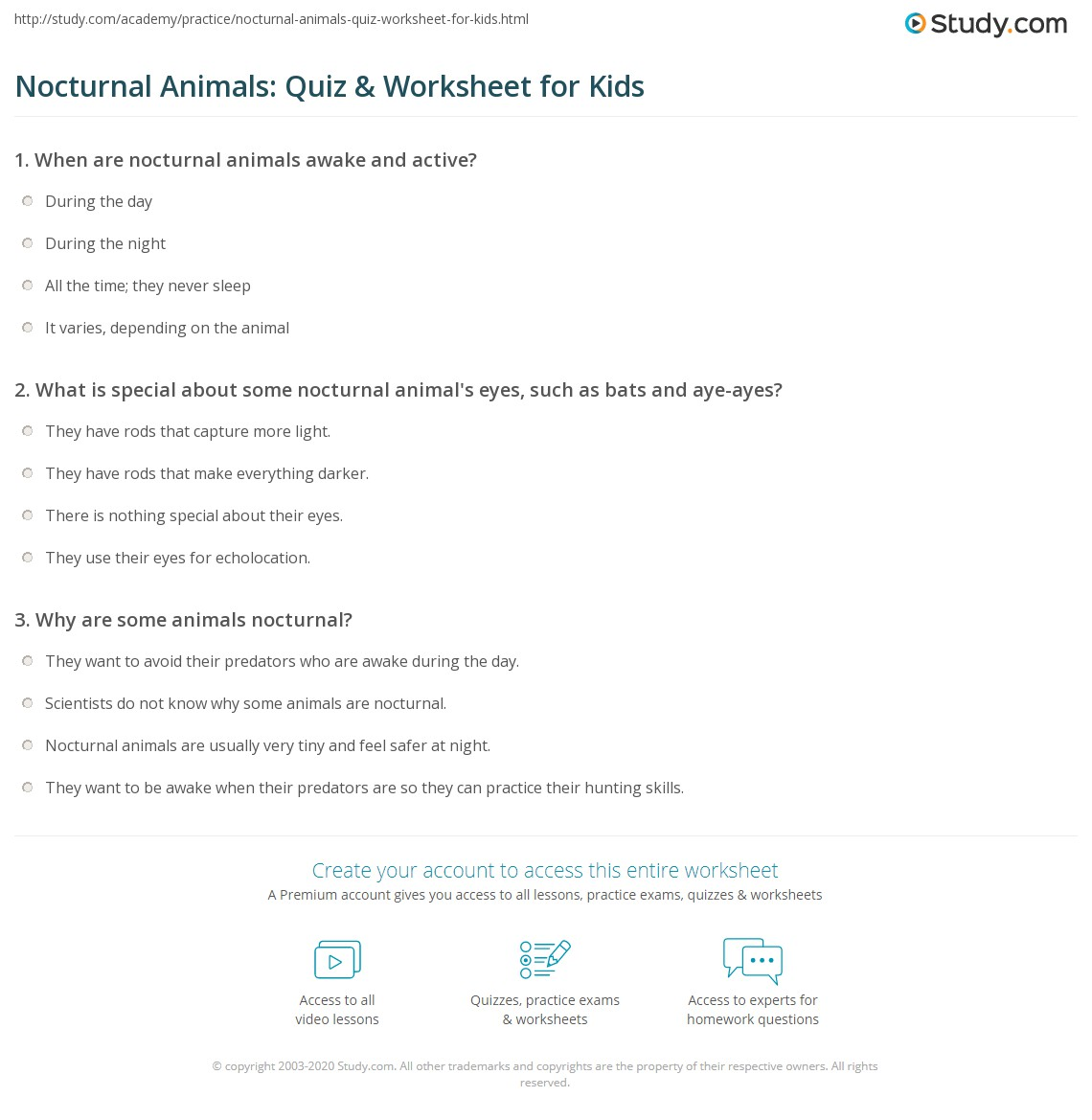 nocturnal animals quiz worksheet for kids. Black Bedroom Furniture Sets. Home Design Ideas