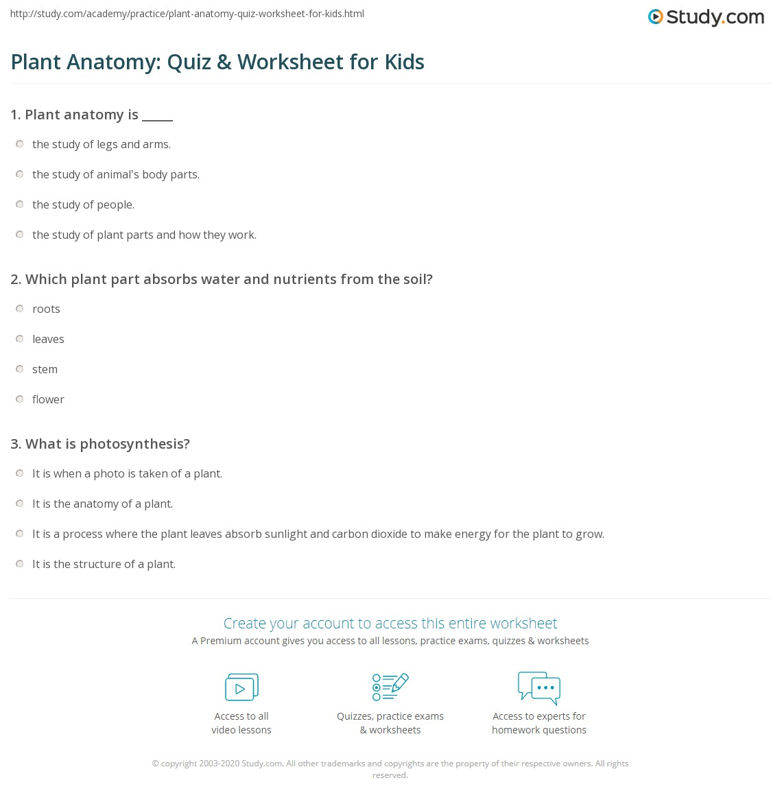 Plant Anatomy: Quiz & Worksheet for Kids | Study.com
