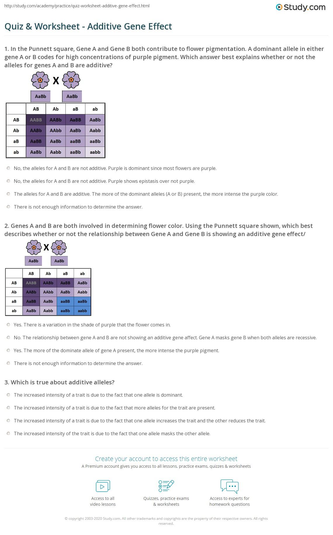 worksheet Spongebob Punnett Square Worksheet worksheet punnett square 1 grass fedjp study site quiz additive gene effect com genes a and