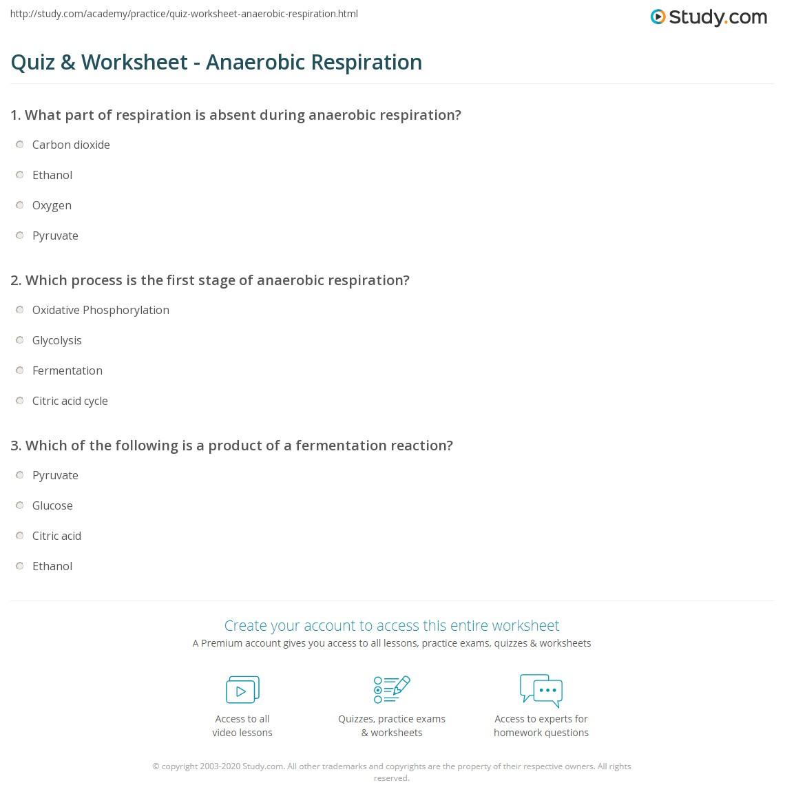 Quiz Worksheet Anaerobic Respiration Study Com