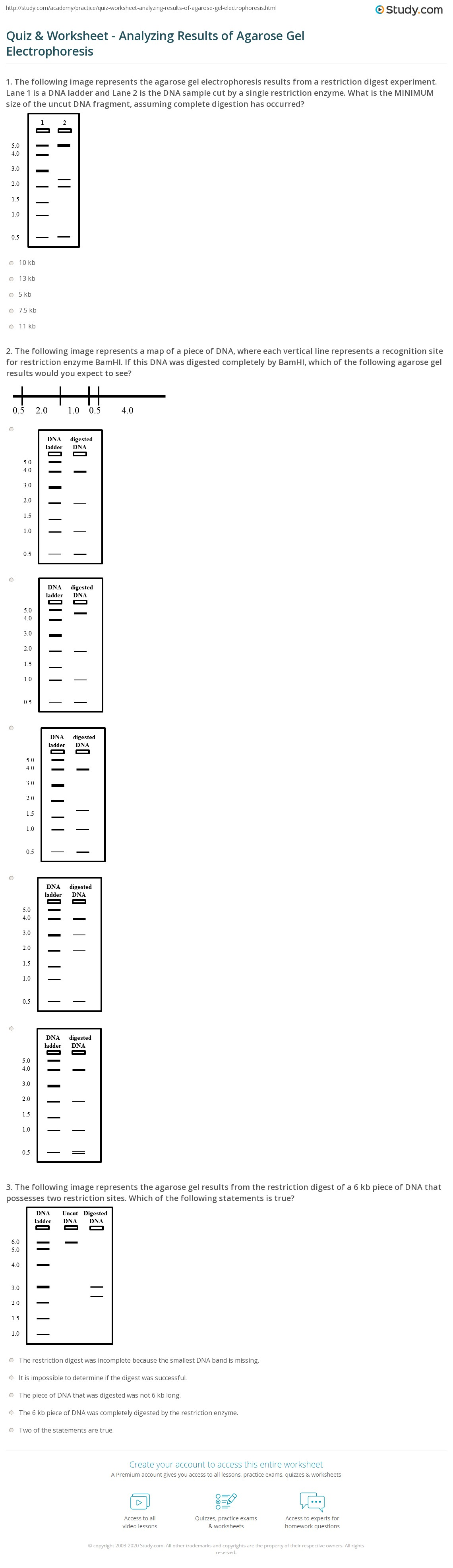worksheet Restriction Enzyme Worksheet quiz worksheet analyzing results of agarose gel electrophoresis the following image represents a map piece dna where each vertical line recognition site for restriction