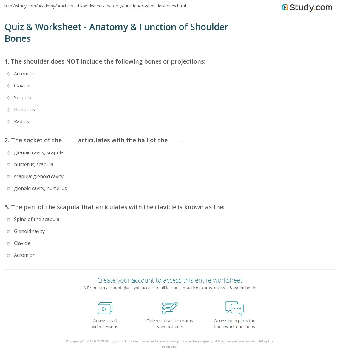 Quiz Worksheet Anatomy Function Of Shoulder Bones Study