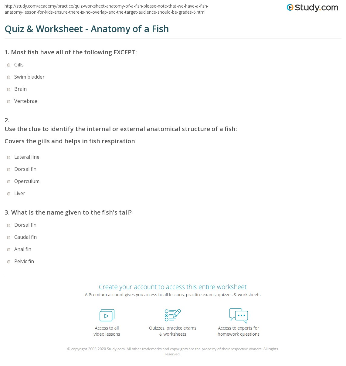 Quiz & Worksheet - Anatomy of a Fish | Study.com
