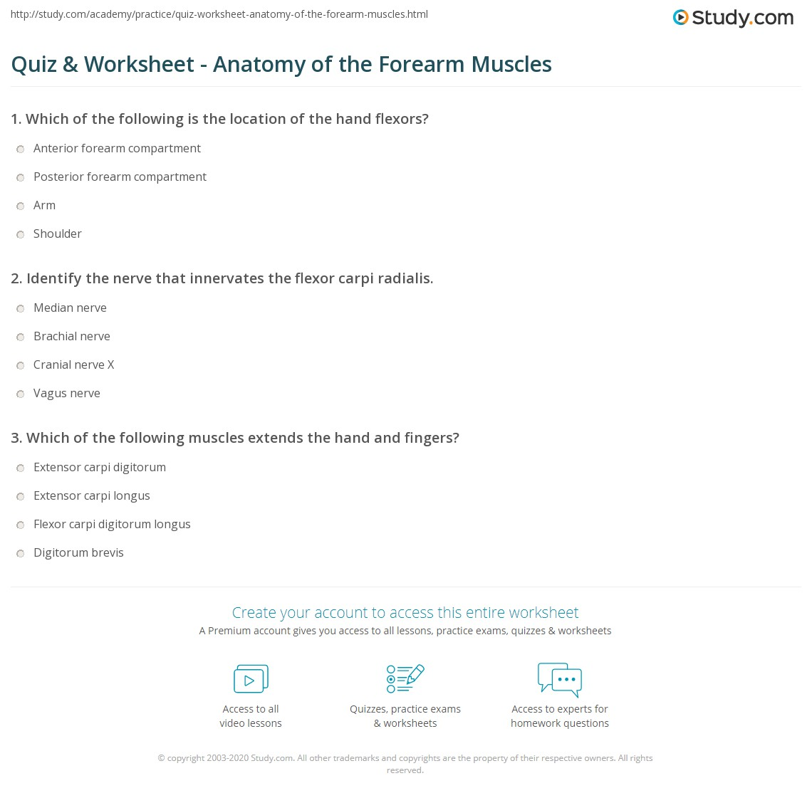 Quiz & Worksheet - Anatomy of the Forearm Muscles | Study.com