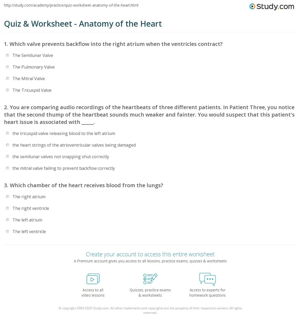 Quiz Worksheet Anatomy of the Heart – Heart Anatomy Worksheet