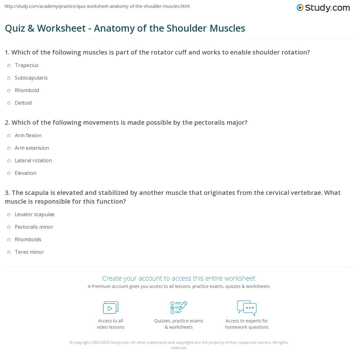 Quiz Worksheet Anatomy Of The Shoulder Muscles Study
