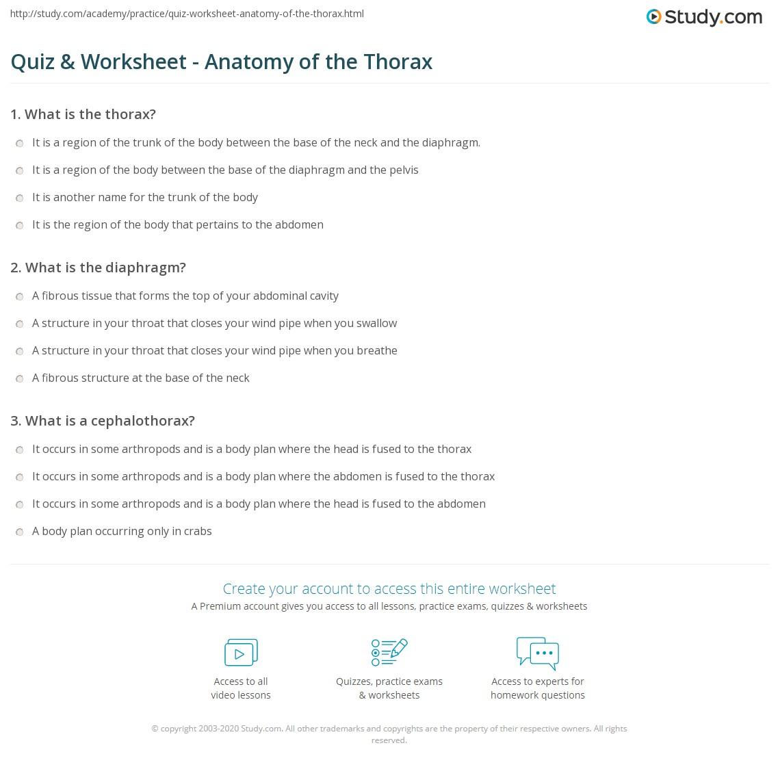 Quiz & Worksheet - Anatomy of the Thorax | Study.com