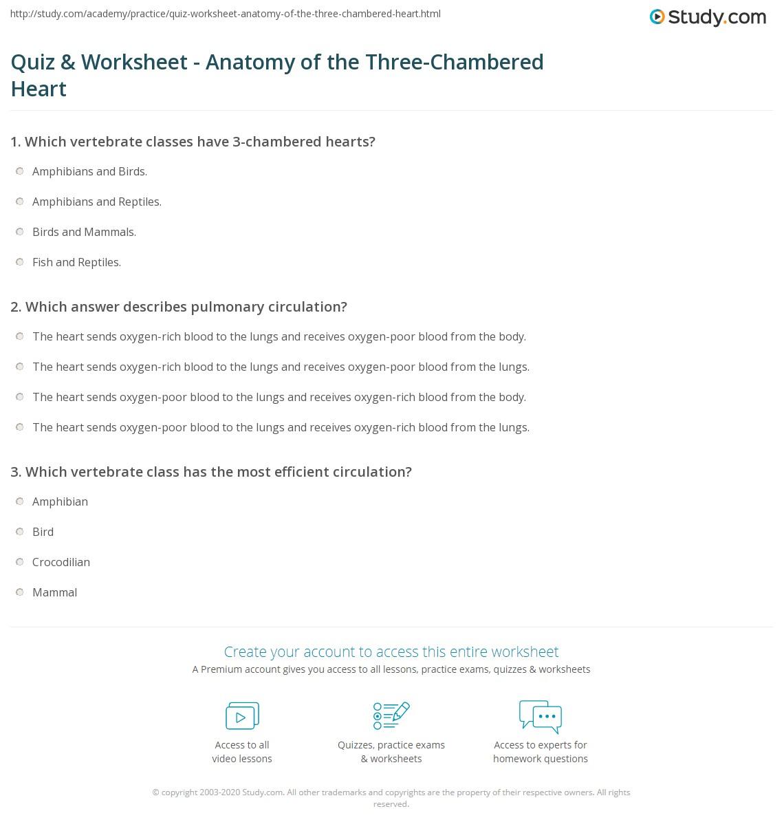 Quiz Worksheet Anatomy Of The Three Chambered Heart Study