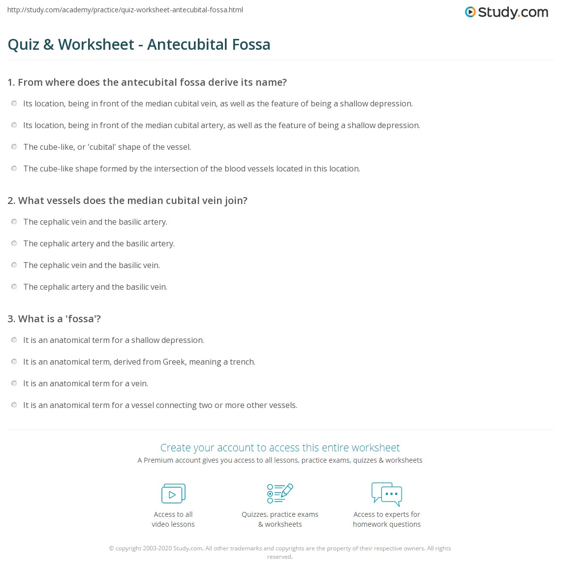 Quiz & Worksheet - Antecubital Fossa | Study.com