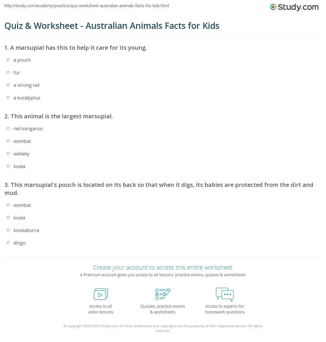 Quiz Worksheet Australian Animals Facts For Kids Study