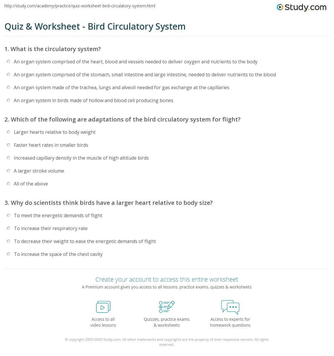 Quiz & Worksheet - Bird Circulatory System | Study.com