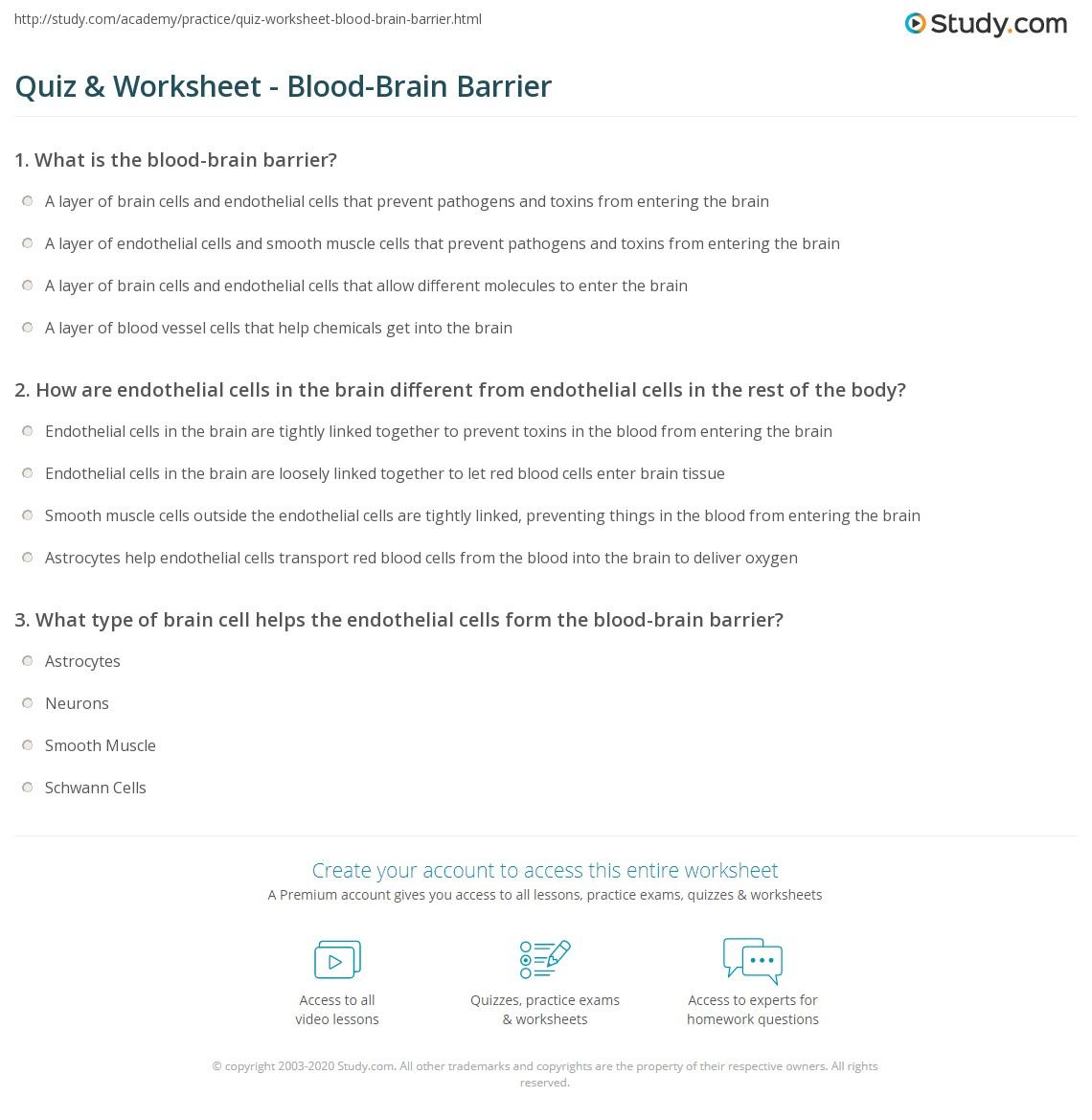 Quiz Worksheet BloodBrain Barrier – The Brain Worksheet