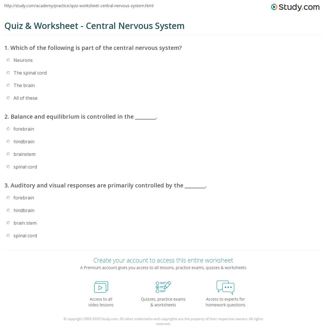 worksheet Central Nervous System Worksheet quiz worksheet central nervous system study com print definition function parts worksheet