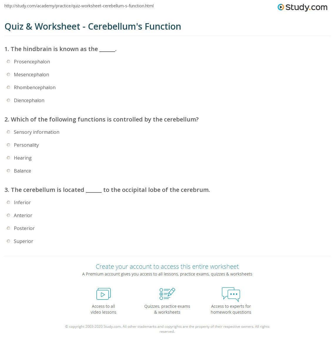 Quiz & Worksheet - Cerebellum\'s Function | Study.com