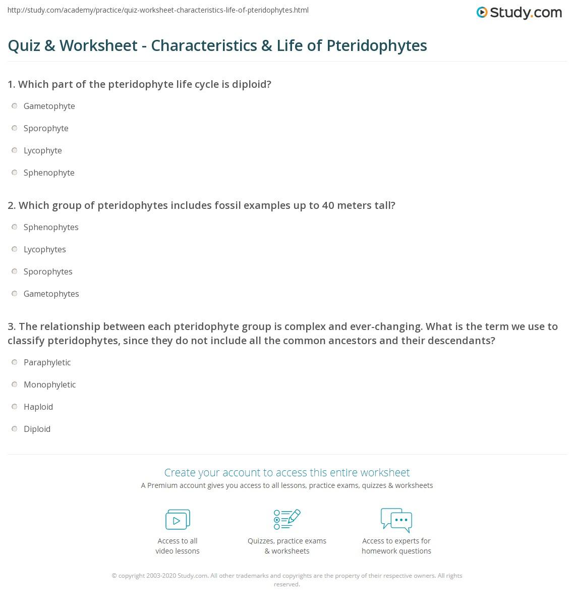 quiz worksheet characteristics life of pteridophytes. Black Bedroom Furniture Sets. Home Design Ideas