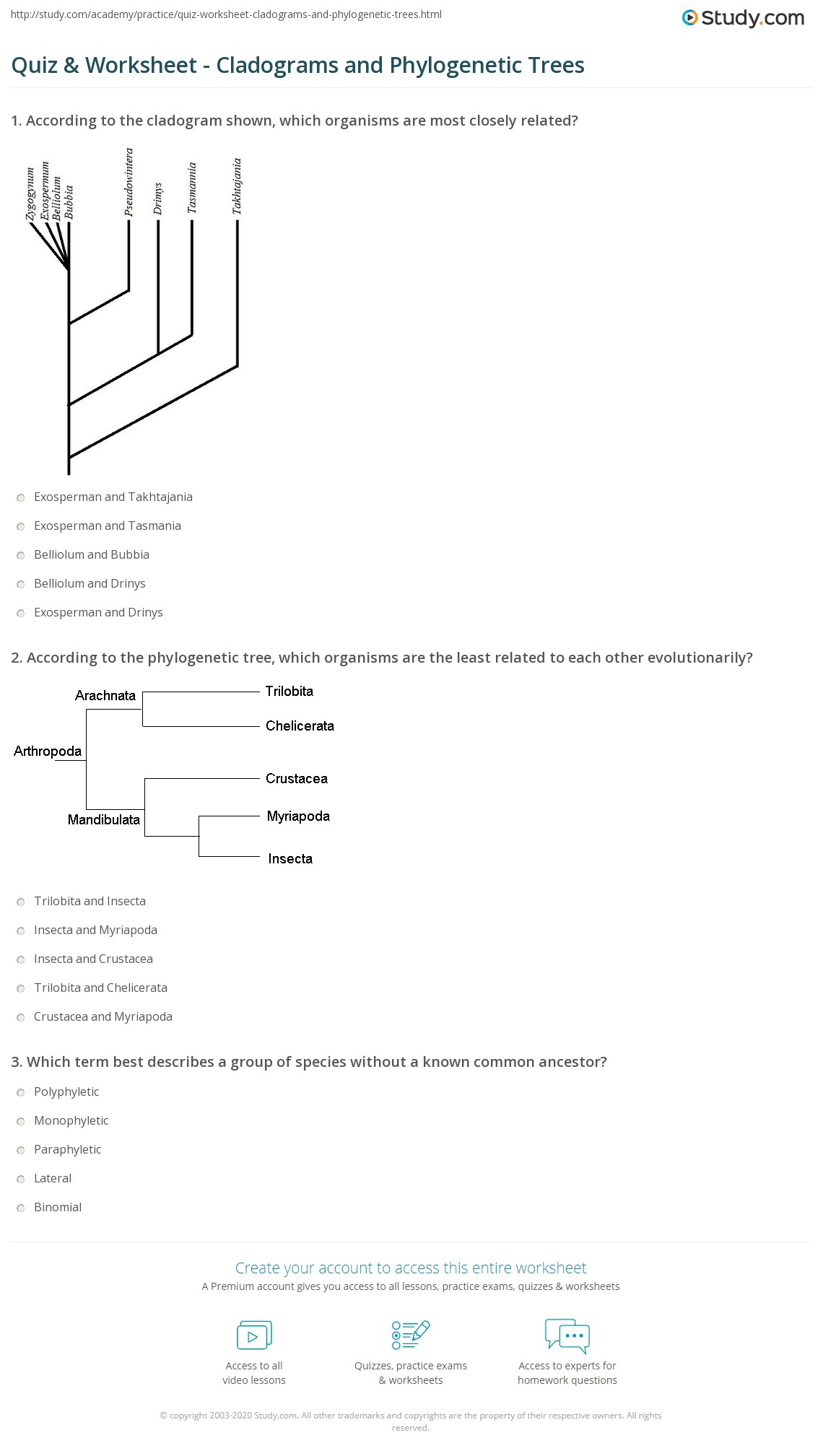 Quiz Worksheet Cladograms And Phylogenetic Trees Study Com