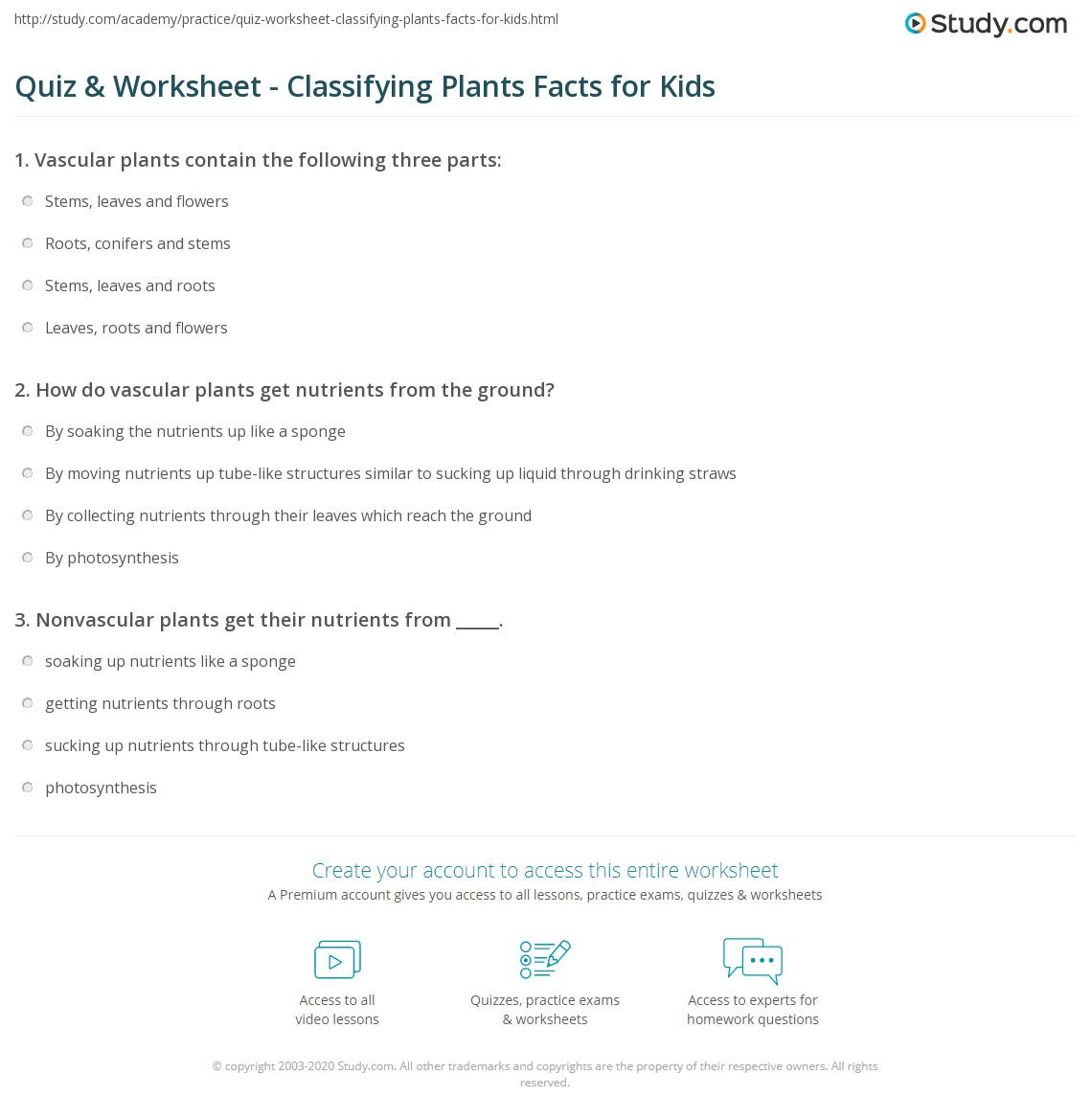 quiz worksheet classifying plants facts for kids