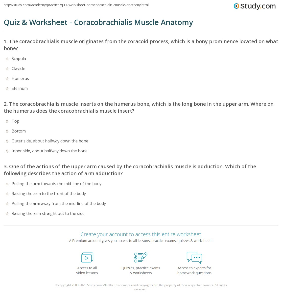 Quiz & Worksheet - Coracobrachialis Muscle Anatomy | Study.com