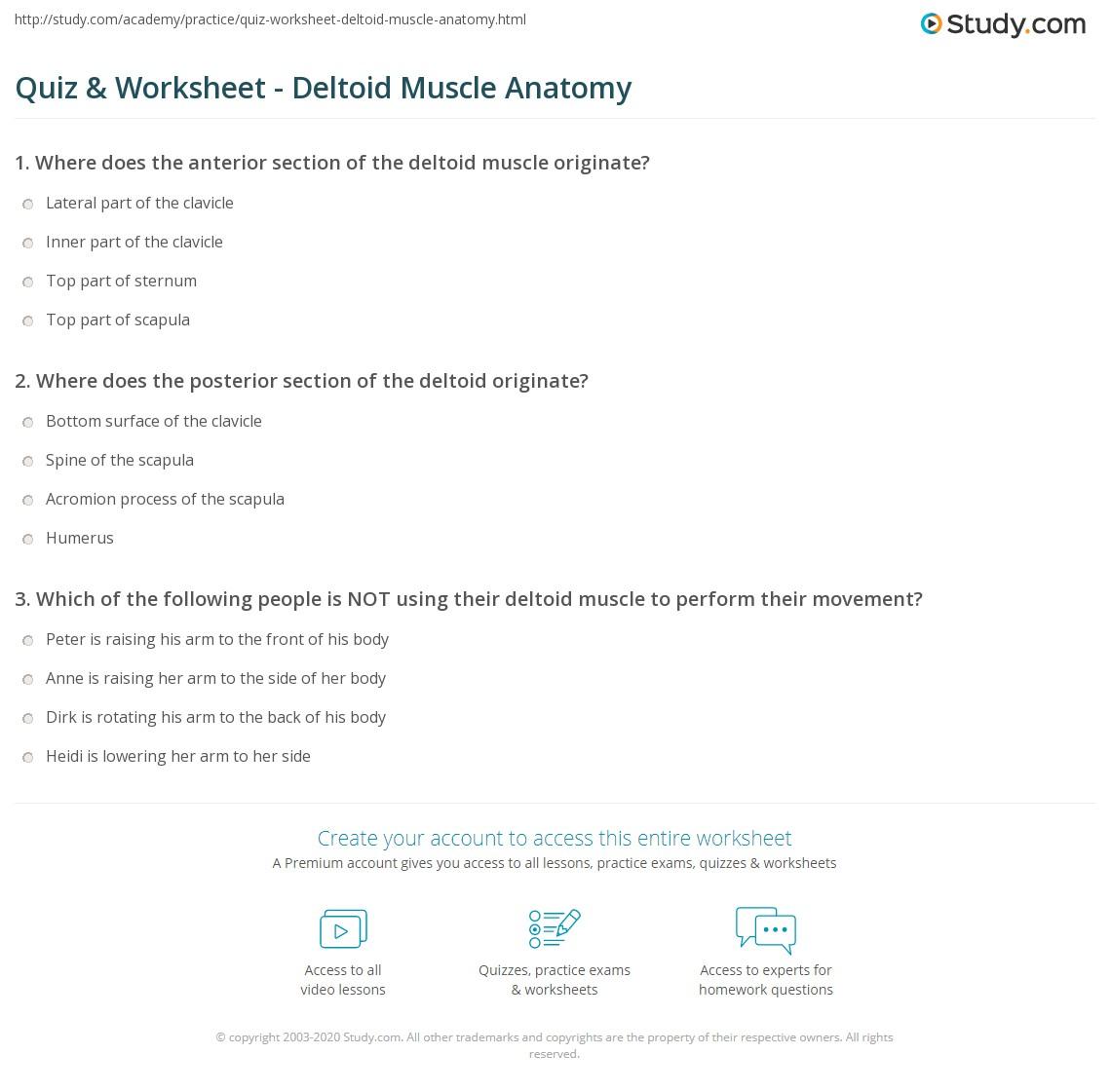 Quiz Worksheet Deltoid Muscle Anatomy Study