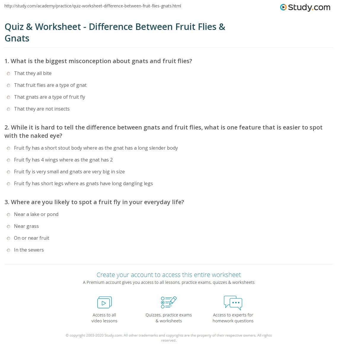 Quiz Worksheet Difference Between Fruit Flies Gnats Study