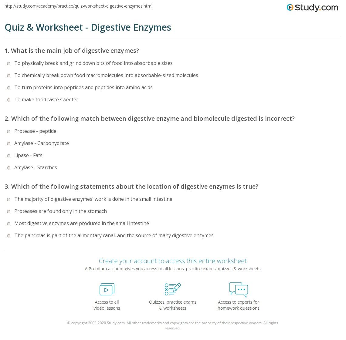 Quiz & Worksheet - Digestive Enzymes | Study.com