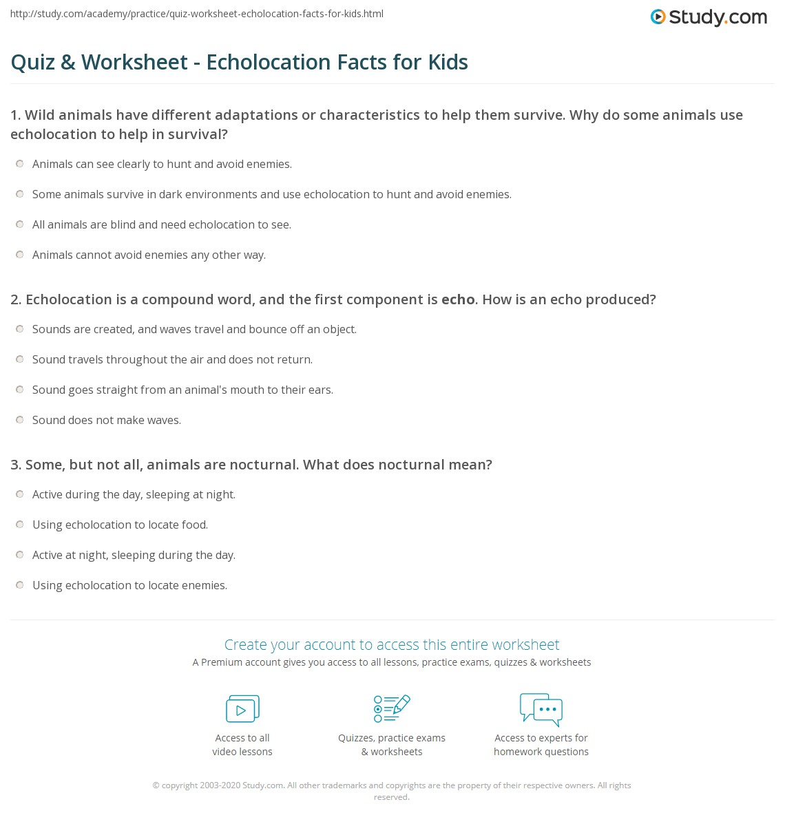 Quiz Worksheet Echolocation Facts for Kids – Day and Night Worksheets