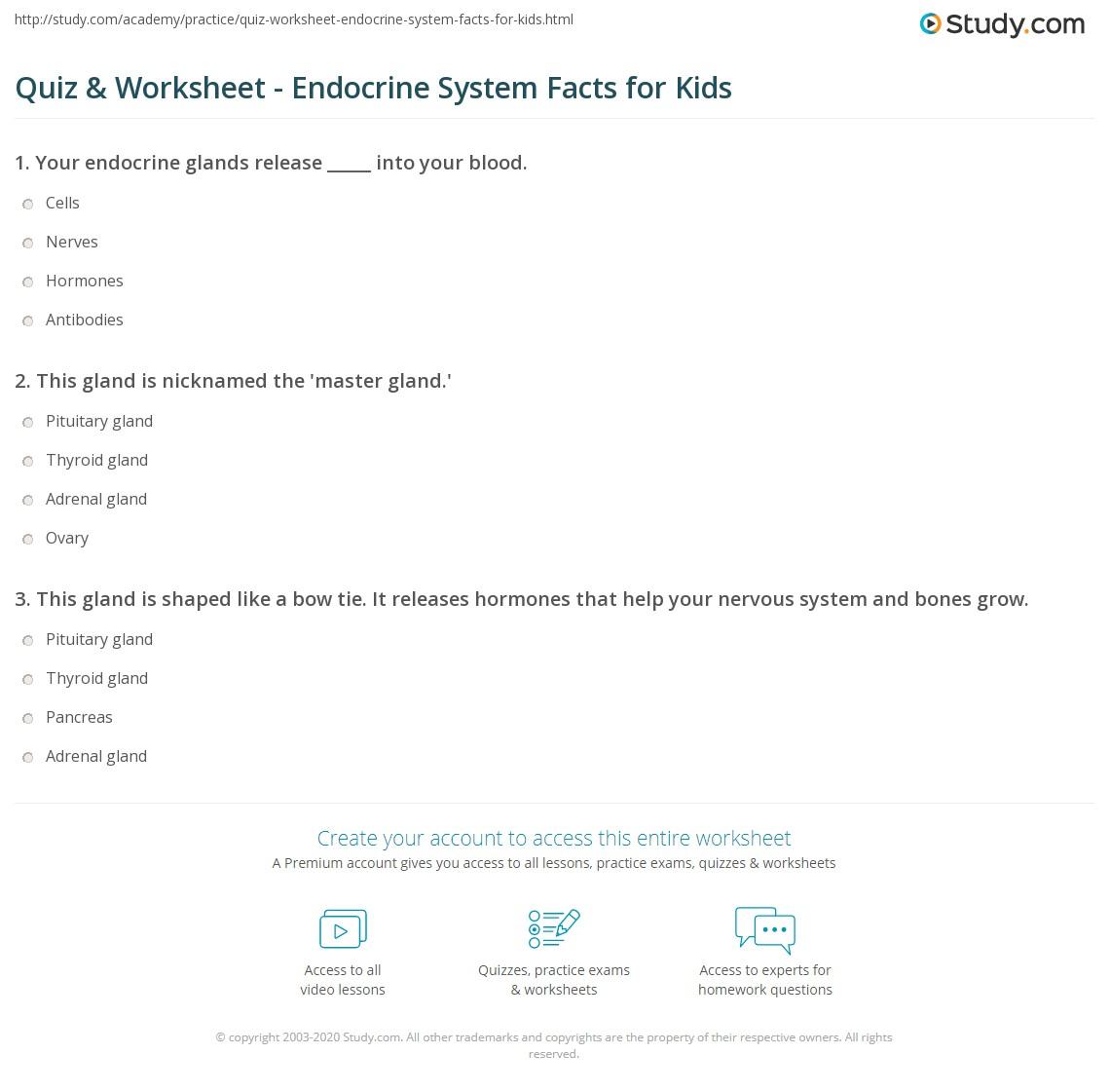 Quiz & Worksheet - Endocrine System Facts for Kids | Study.com
