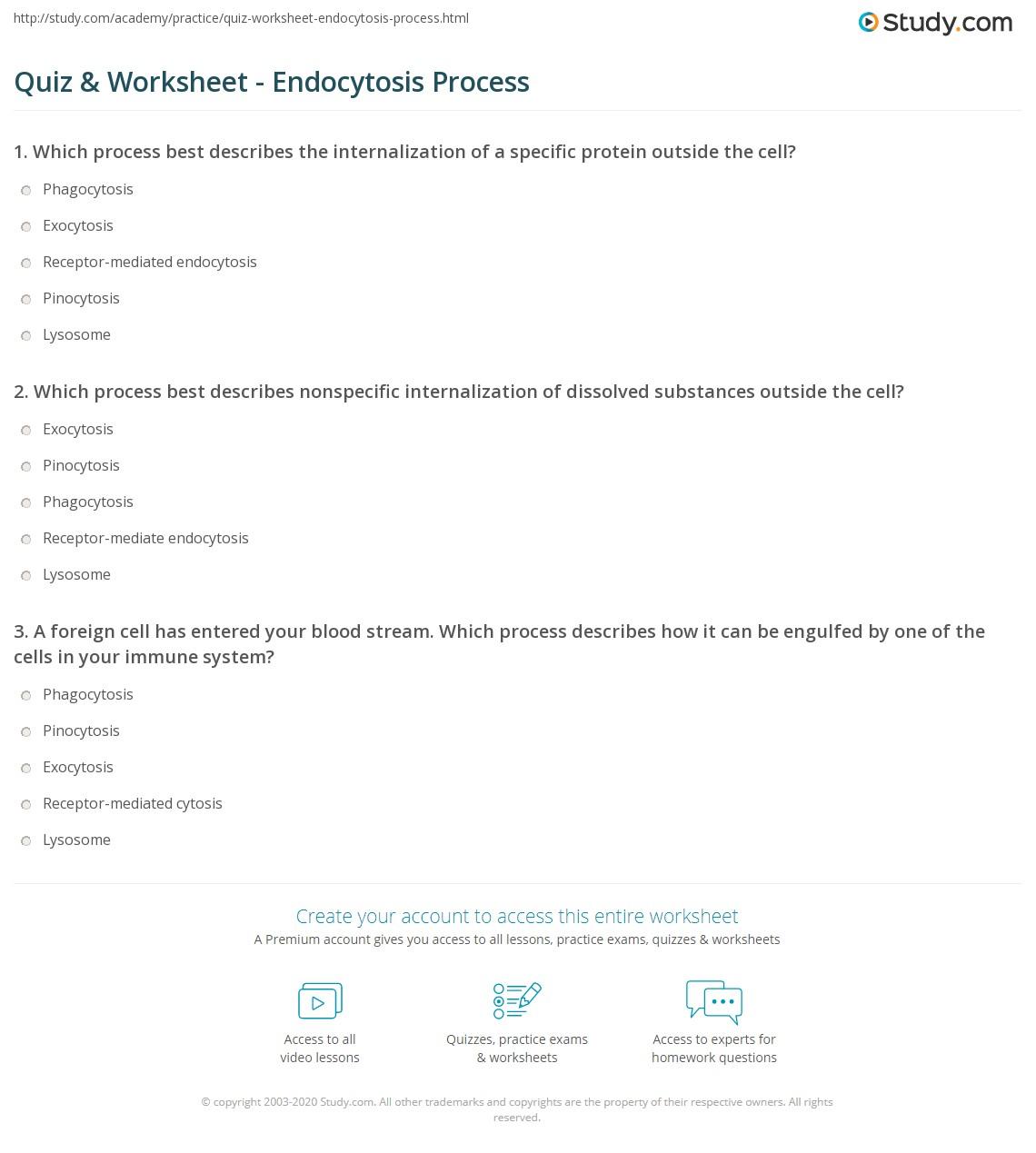 quiz worksheet endocytosis process. Black Bedroom Furniture Sets. Home Design Ideas