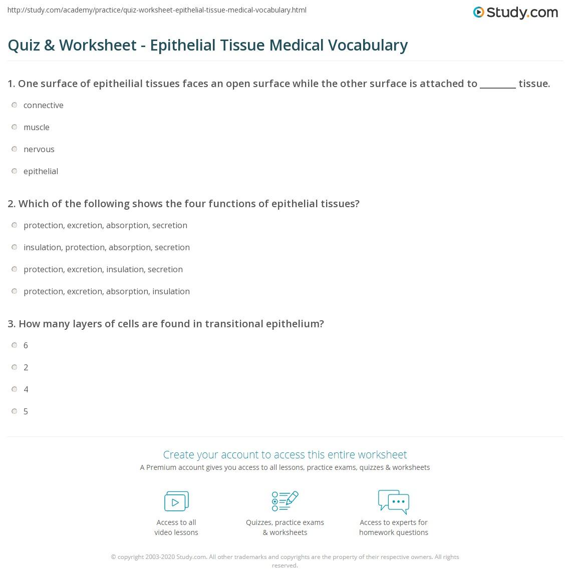 quiz worksheet epithelial tissue medical vocabulary. Black Bedroom Furniture Sets. Home Design Ideas