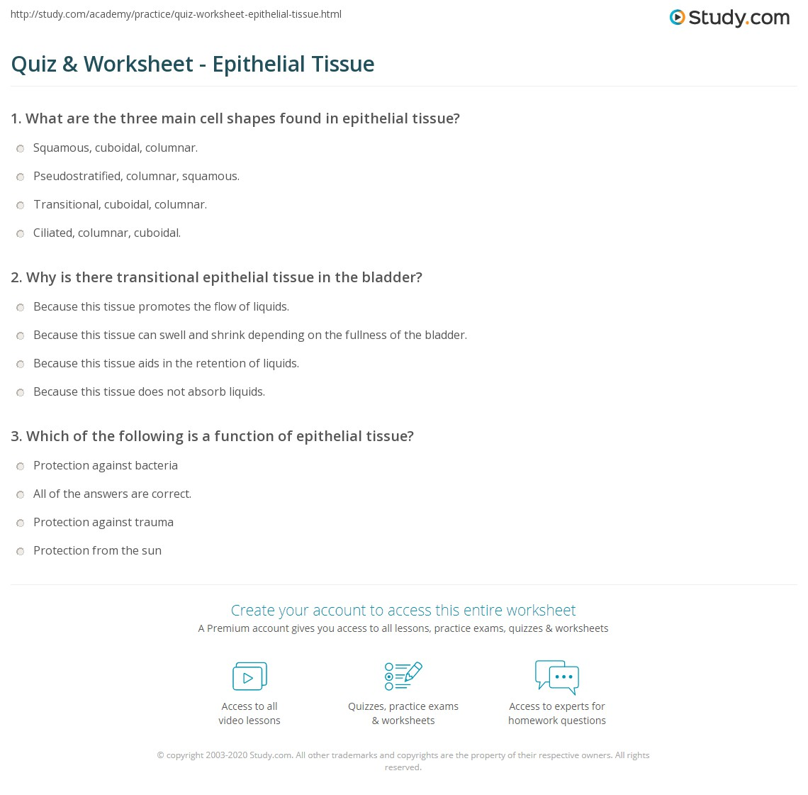 Quiz Worksheet Epithelial Tissue Study