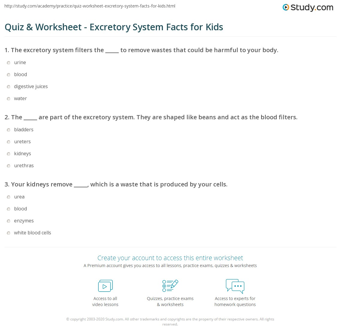 Quiz Worksheet Excretory System Facts For Kids Study