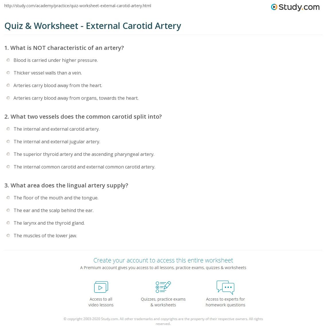 Quiz Worksheet External Carotid Artery Study