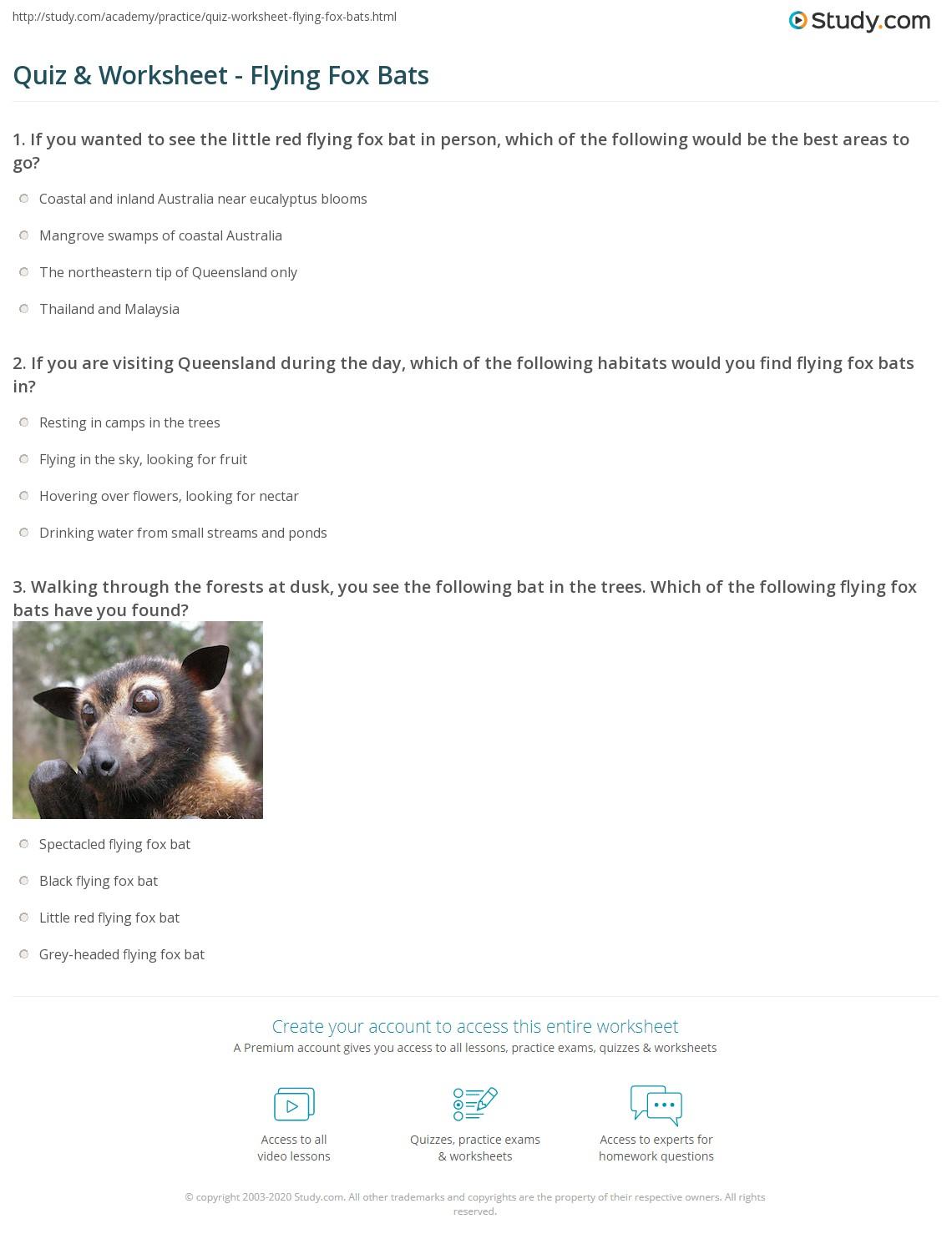 Quiz Worksheet Flying Fox Bats Study Com