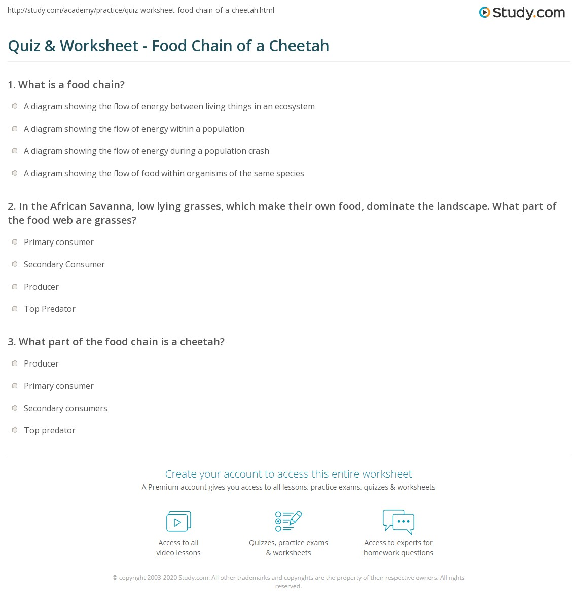 Quiz & Worksheet - Food Chain of a Cheetah | Study com