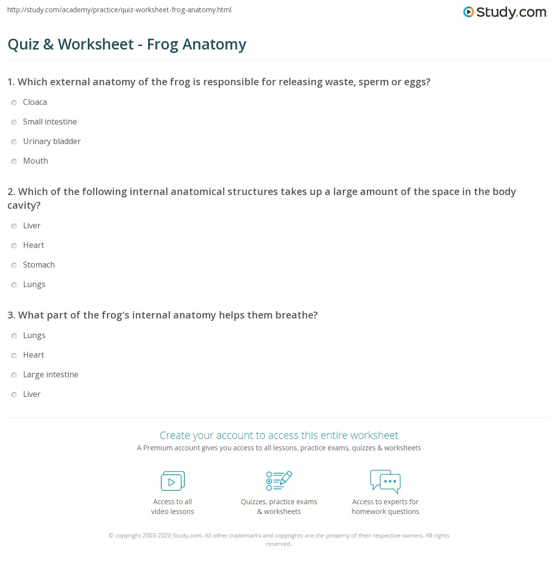 Quiz Worksheet Frog Anatomy Study