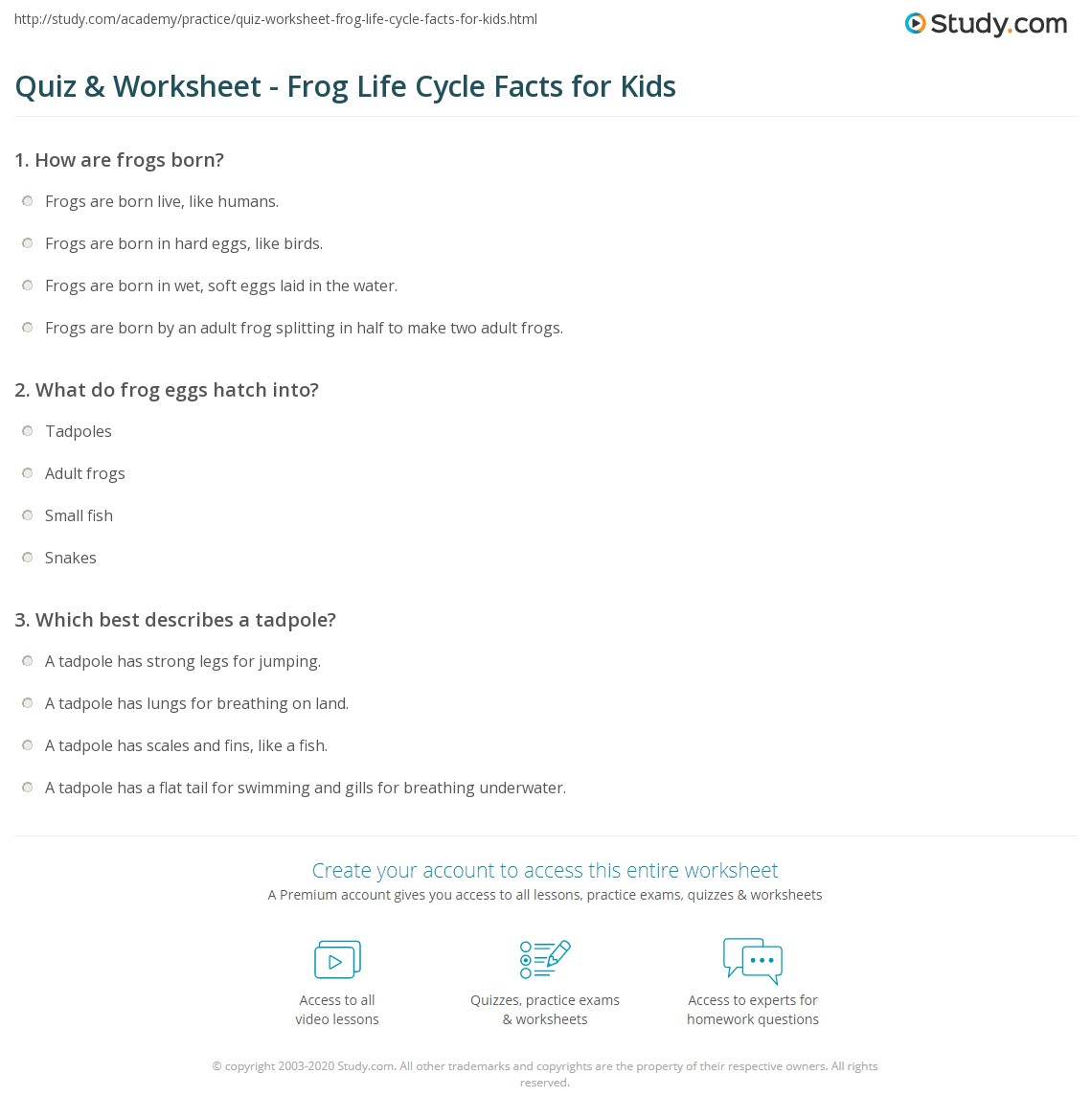 Quiz Worksheet Frog Life Cycle Facts for Kids – Frog Life Cycle Worksheet