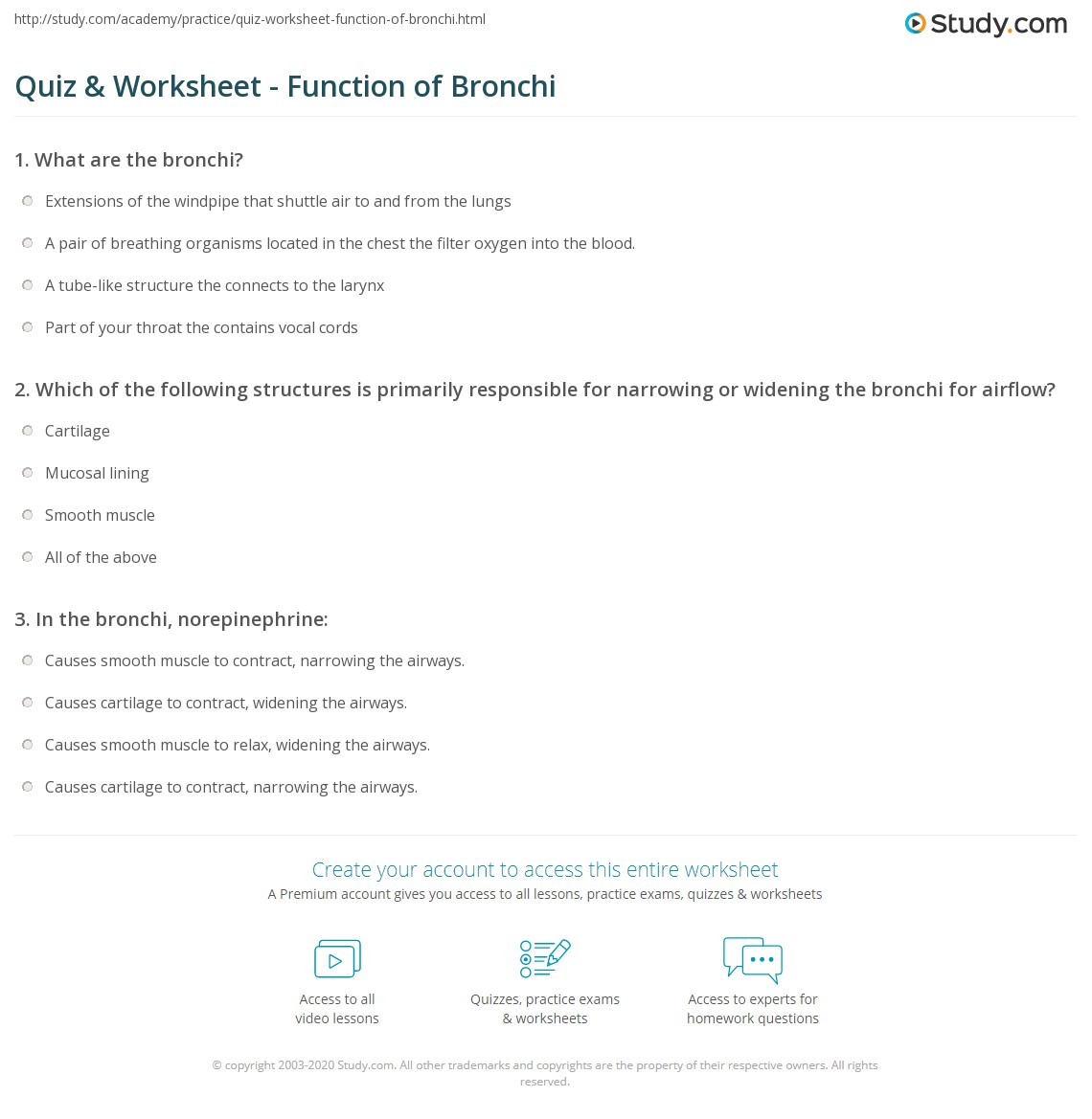Quiz Worksheet Function Of Bronchi Study