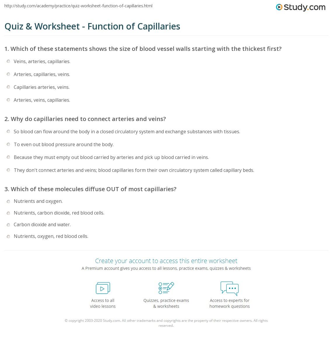 Quiz Worksheet Function Of Capillaries Study