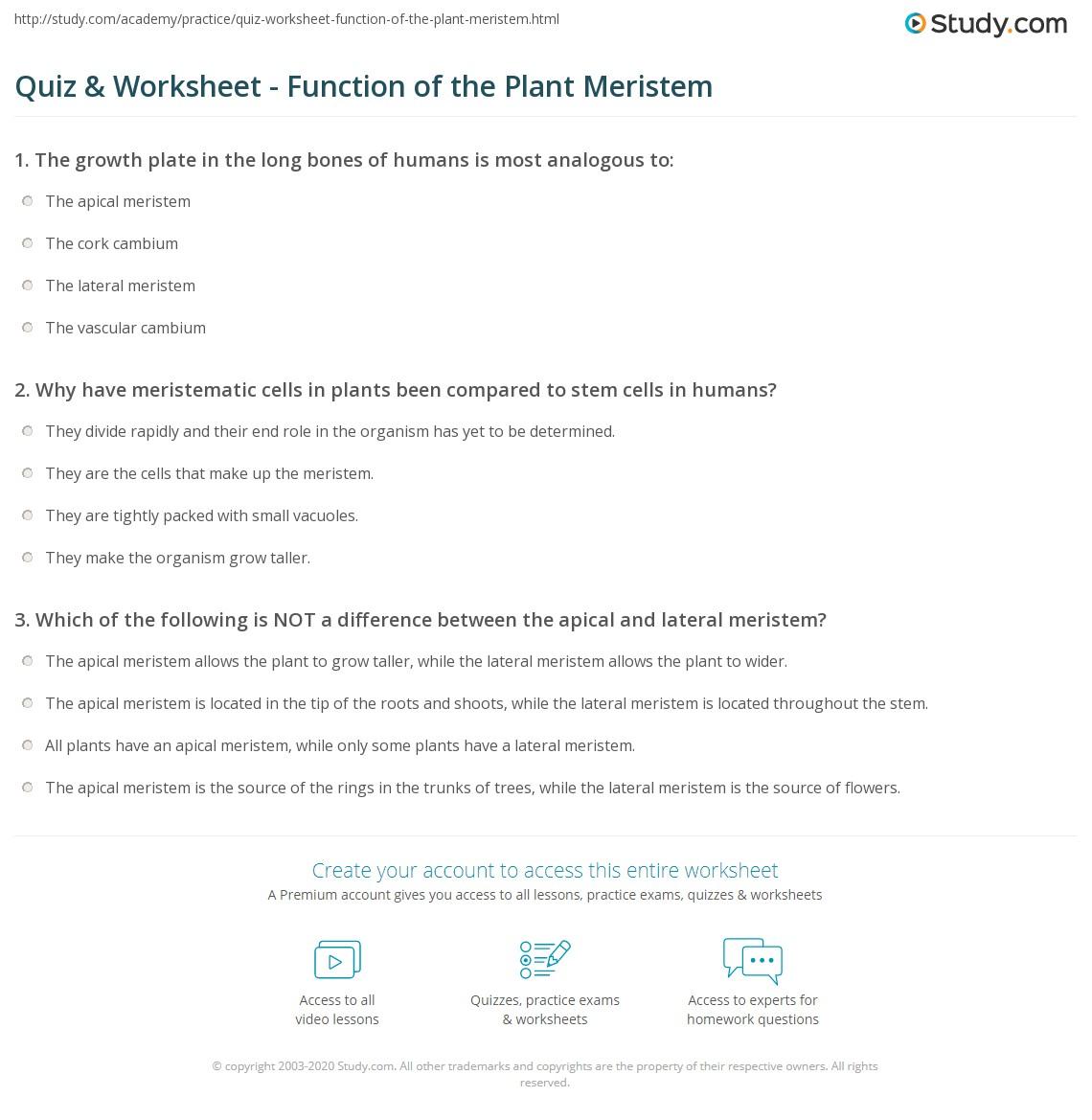 Quiz Worksheet Function of the Plant Meristem – Worksheet Function