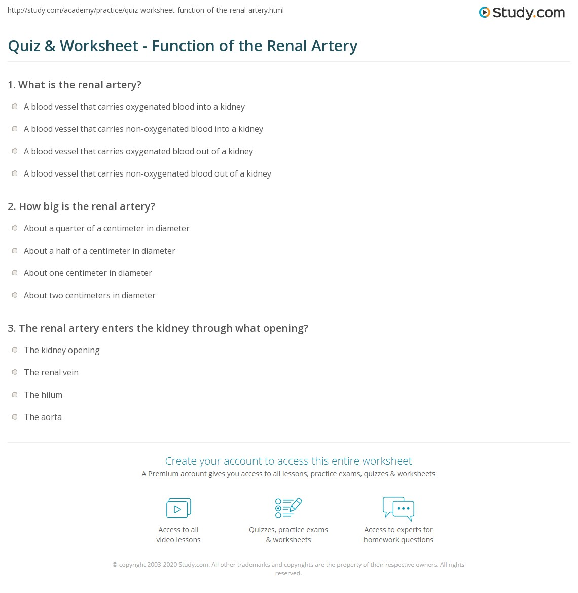 quiz worksheet function of the renal artery study com