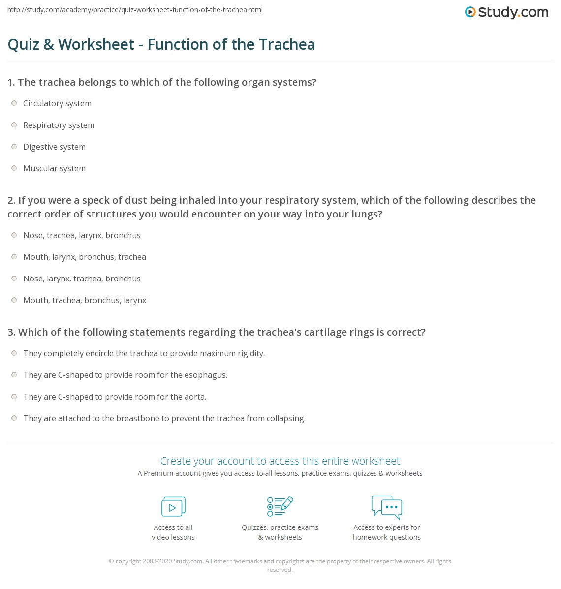 Quiz Worksheet Function Of The Trachea Study