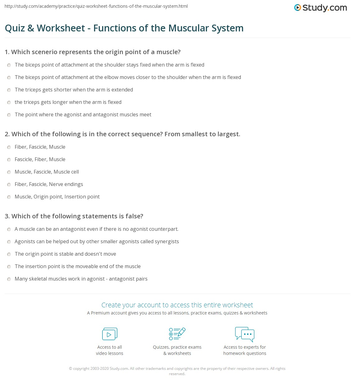 Quiz Worksheet Functions of the Muscular System – The Muscular System Worksheet