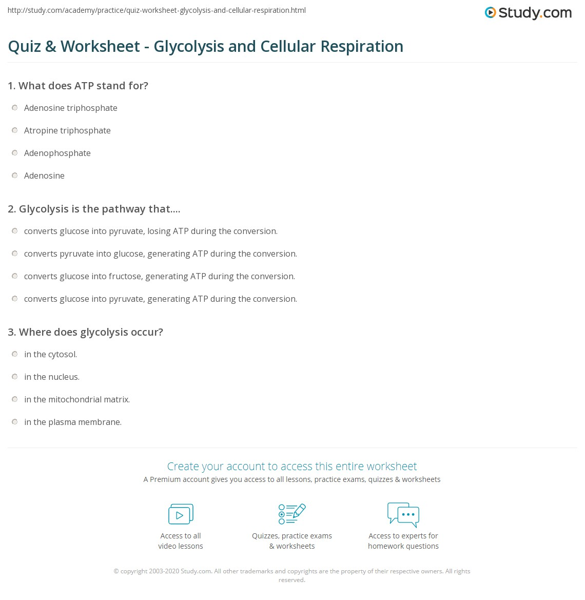 Quiz Worksheet Glycolysis And Cellular Respiration