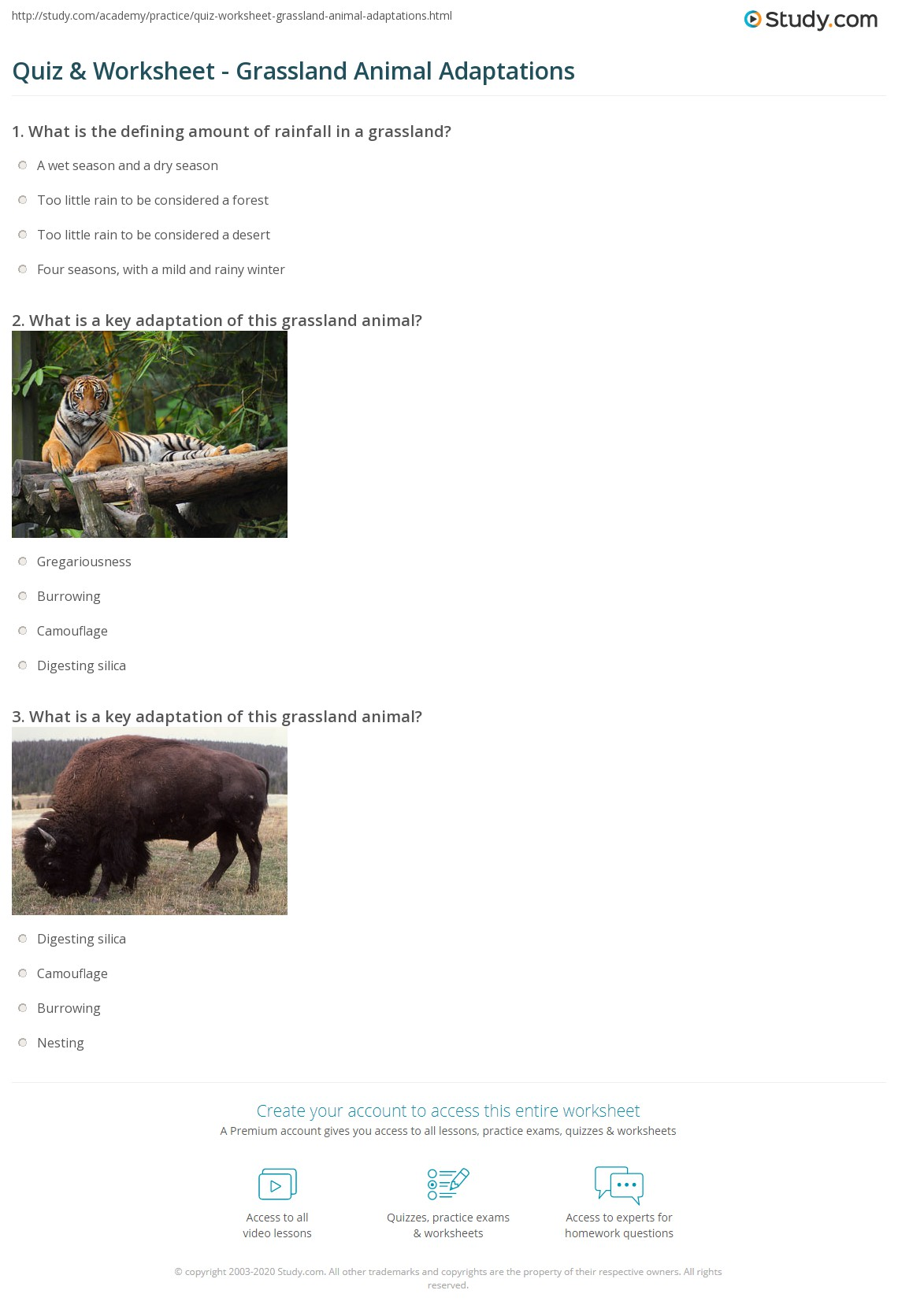 Quiz Worksheet Grassland Animal Adaptations Study